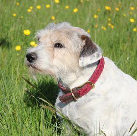 WeatherBeeta Leather Plaited Dog Collar - Brown/Maroon