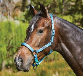 Weatherbeeta Ombre Headcollar - Ocean Breeze
