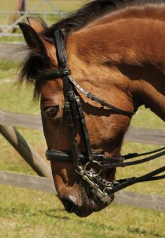 Heritage Double Comfort Bridle