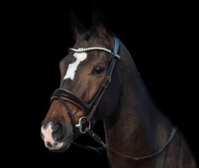 PS of Sweden Bridle GP, Non-Patent Brown