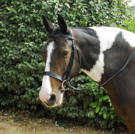 Windsor Plain Hunter Bridle