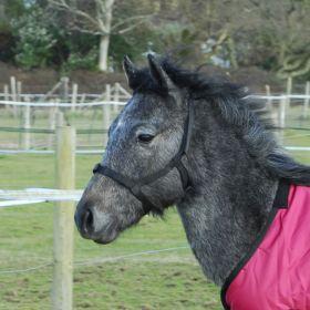 Rhinegold (Metal Free) Field Safe Foal Headcollar - Rhinegold