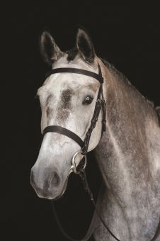 Collegiate Hunt Cavesson Bridle Black