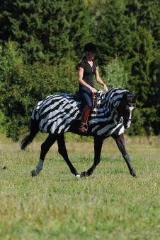 Bucas Buzz Off Riding Zebra Rug
