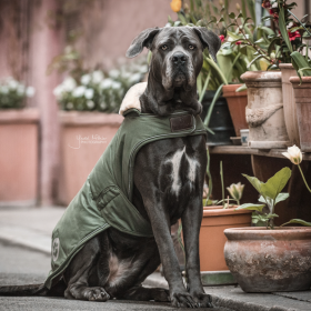 Kentucky Waterproof Dog Coat - Olive Green