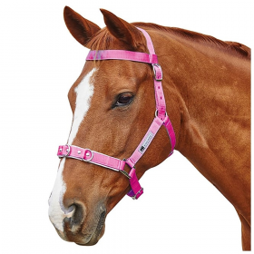 Kincade Brights Nylon Lunge Cavesson  Pink