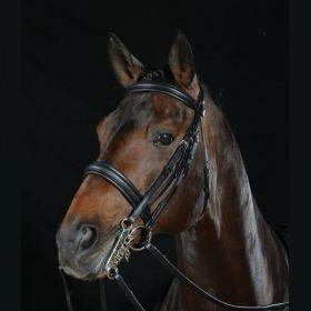 Collegiate Padded Headpiece Raised Weymouth Bridle  Black