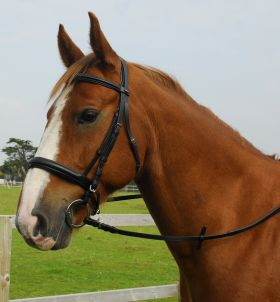 Heritage English Leather Comfort Bridle-Cavesson Noseband