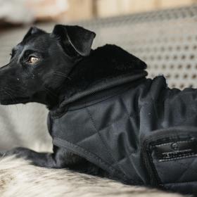 Kentucky Dog Coat- Black