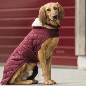 Kentucky Dog Coat- Bordeaux