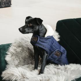 Kentucky Dog Coat Pearls - Navy