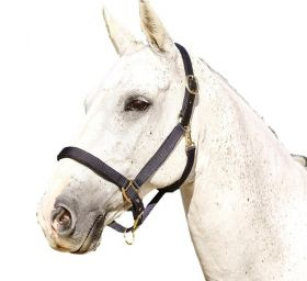 Kincade Deluxe Webbed Headcollar with Leather Crown Black