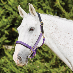 Kincade Deluxe Webbed Headcollar with Leather Crown Purple