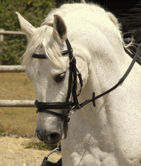 Rhinegold German Leather Bridle With Wide Flash Noseband