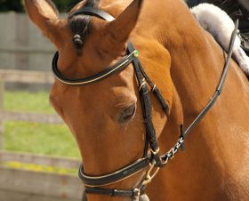 Rhinegold German Leather Bridle With Gold Piping Trim