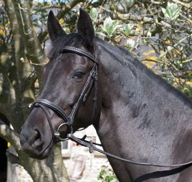 Rhinegold Elegance Flash Style Bridle