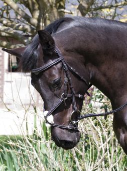 Rhinegold Elegance German Leather Bridle With Mexican Style Noseband