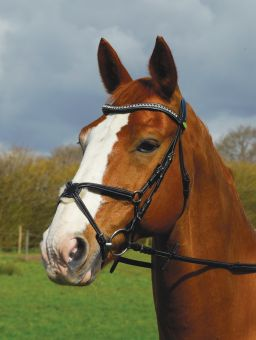 Rhinegold Italian Leather Anatomical Bridle With Mexican Noseband
