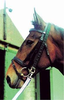 IV Horse Super Pro Easy Lunger