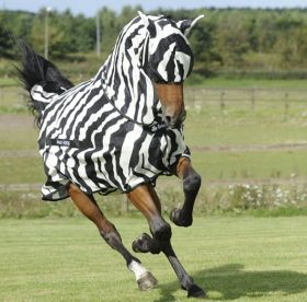 Bucas Buzz Off Zebra Fly Sheet Full Neck